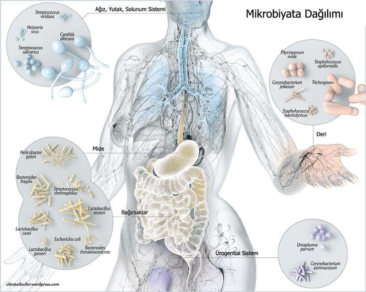 """Varlığını yeni fark ettiğimiz kalp, akciğer, böbrek, beyin veya dalak gibi bir """"organımız"""" var. Bu yeni organın diğerlerinden en önemli farkı anne karnında iken bu organa ait tek bir hücre bile bul…"""