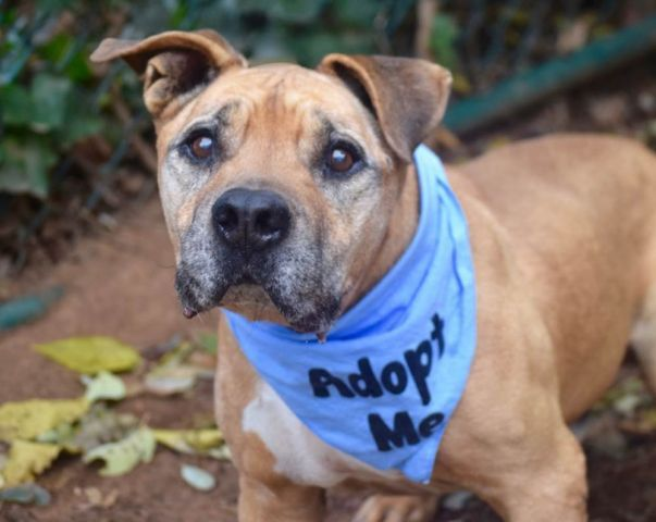 CHEECH - 11773 - - Staten Island  TO BE DESTROYED 11/14/17 **ON PUBLIC LIST** -  Click for info & Current Status: http://nycdogs.urgentpodr.org/cheech-11773/