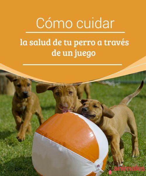 Cómo cuidar la salud de tu perro a través de un juego   Un juego puede ser genial no solo para pasar un buen rato y entretenerse, sino también para mantenerse en forma. MIra los mejores con tu perro  #Salud #juego #perro #entretenerse
