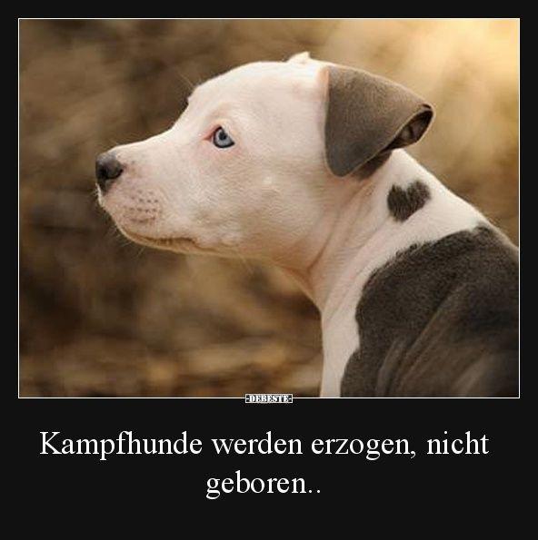 Kampfhunde Werden Erzogen Nicht Geboren Lustige Bilder Spruche Witze Echt Lustig Spruche Tiere Hunde Spruche Tierliebe