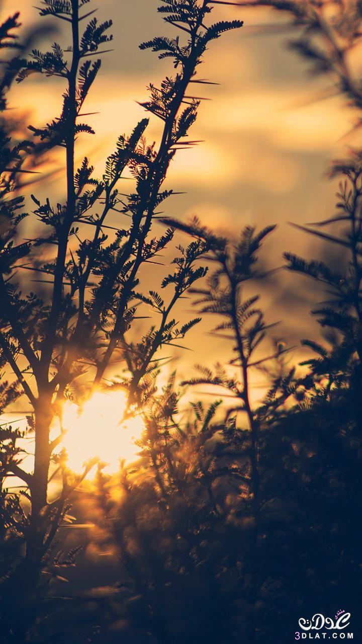 خلفيات موبايل جديدة 2019 خلفيات موبايل روعة اجمل خلفيات الجوال خلفيات ايفون وتابلت رقيقة Tree Wallpaper Backgrounds Sunset Wallpaper Tree Wallpaper Phone
