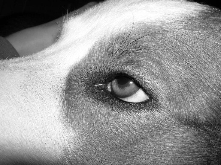 Ojo en blanco y negro. Occhio in bianco e nero.
