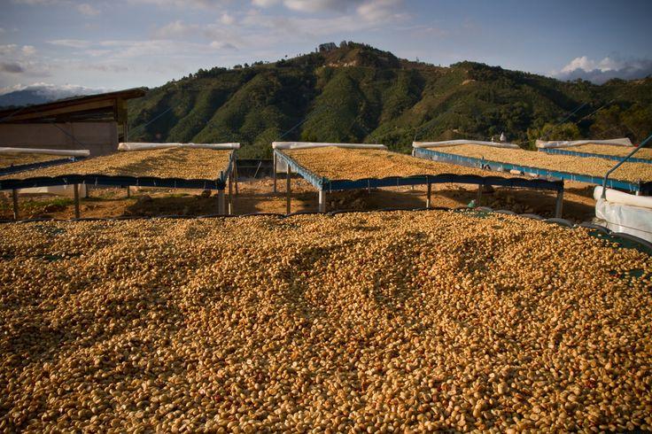 Costa Rica Tarrazu | #káva