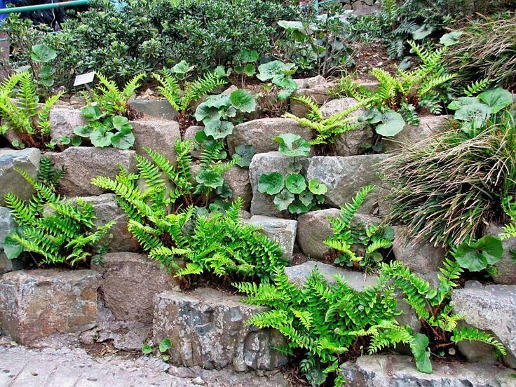 Korean rock wall garden with ferns
