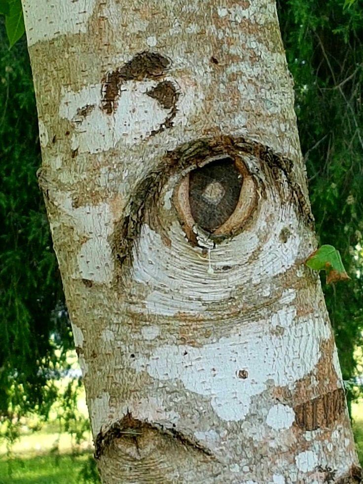 The Seeing Tree ~ Gloucester River  NSW Australia