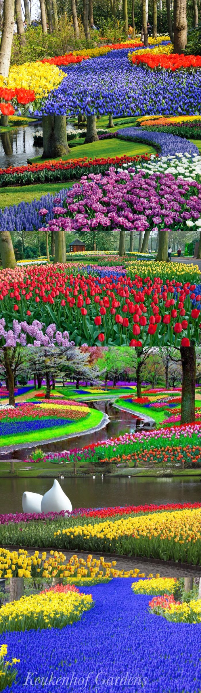 Tulip fields outside Keukenhof Gardens in Netherlands  Many people often mistake Keukenhof, also known as the Garden of Europe, as the designated space of the tulip fields. However, these majestic fields are located just outside the garden and are mostly privately owned.