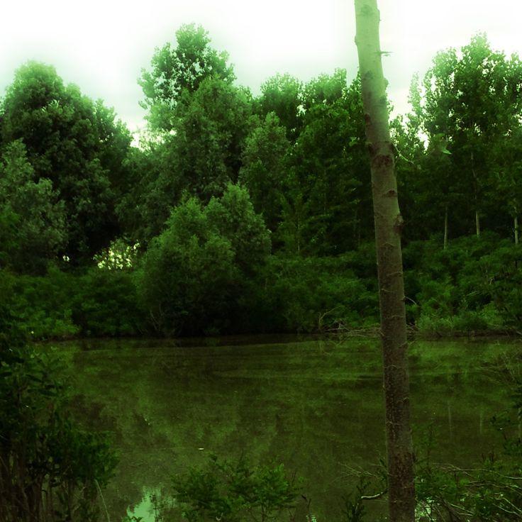 Swamp. By Bustaffa