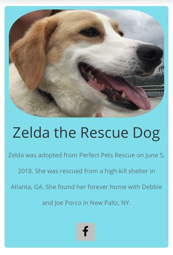 Zelda The Rescue Dog Rescue Dogs Dogs Animal Rescue