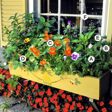 Enjoy a HarvestGardens Ideas, Edible Flower, Gardens Windows Boxes, Harvest Boxes, Beautiful Windows, Edible Plants, Flower Boxes, Boxes Flower, Window Boxes
