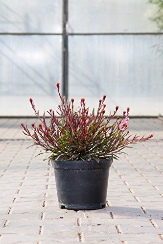 kleines topfgarten mit stil eintrag bild der bfdacfedebafaac