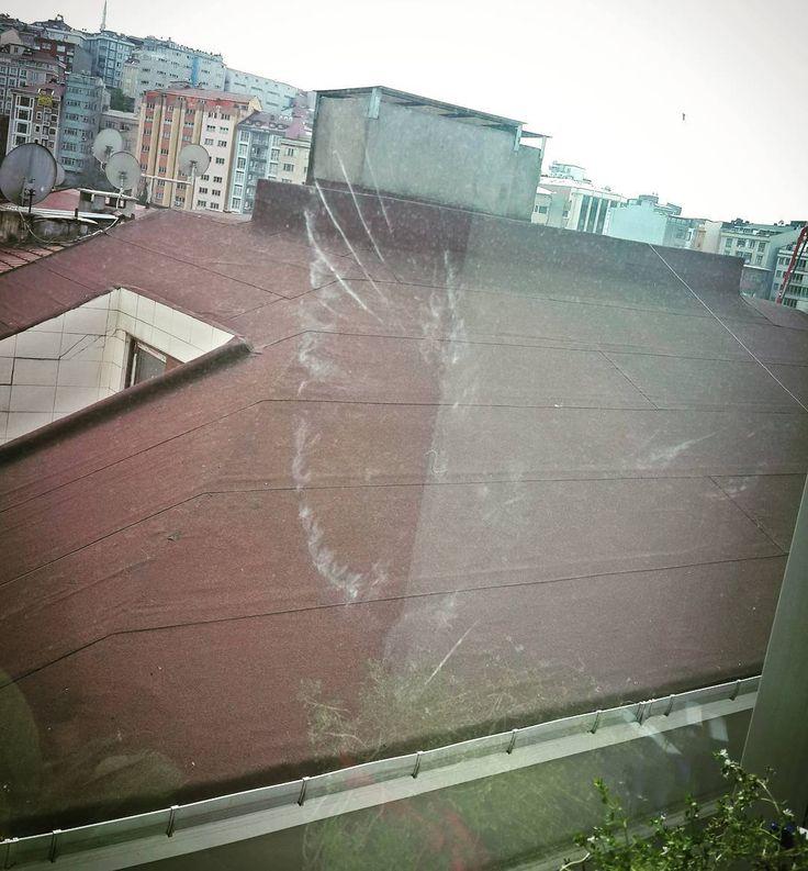 Sanki çarpınca cama ruhunu teslim etmiş güvercin kardeş  #picoftheday #pigeon shape on window