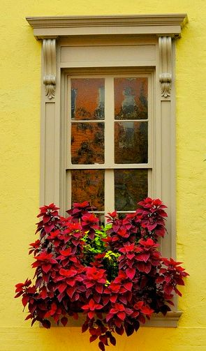 yellow and beige with coleus in the window box