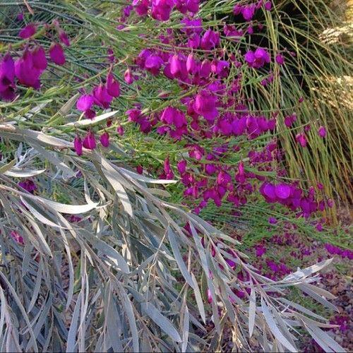 pink walnut creek