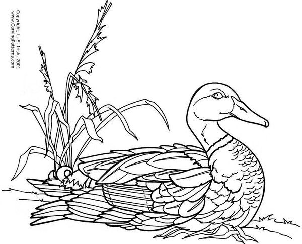 Puddle ducks pattern package ducks pictures and search for Wood burning design templates