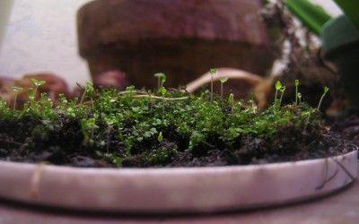 moss-indoors