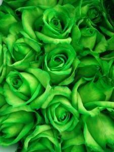 Bunga mawar hijau gelap