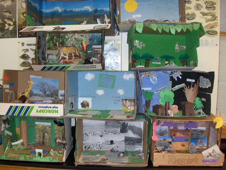 Biomes Worksheets & Learning Unit - Exploring Our Natural ...