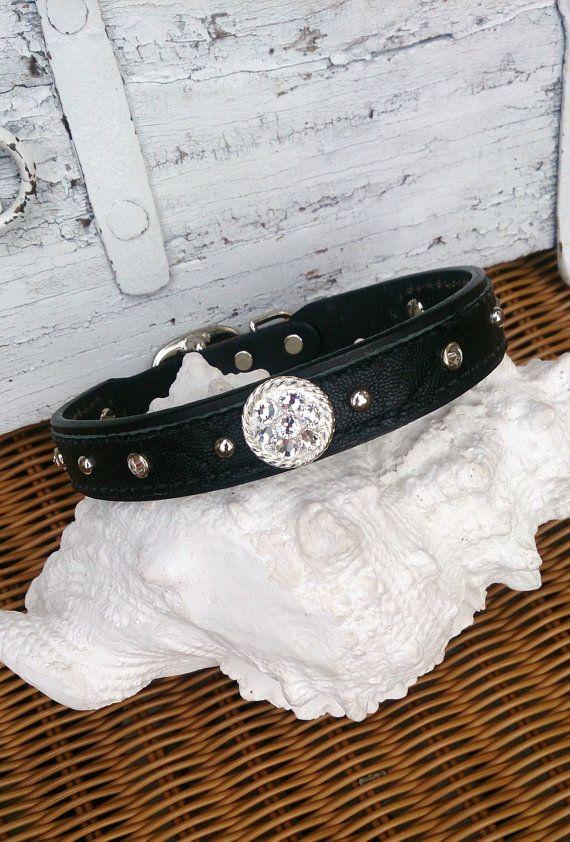 Black Concho Dog Collar Bling Dog Collar by SecretStashBoutique