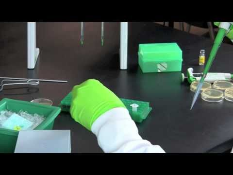 ▶ Bacterial Transformation - YouTube
