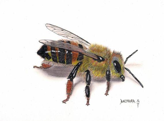 DESSIN insecte abeille dessin crayons de couleur Animaux Crayon  - Abeille d'Europe