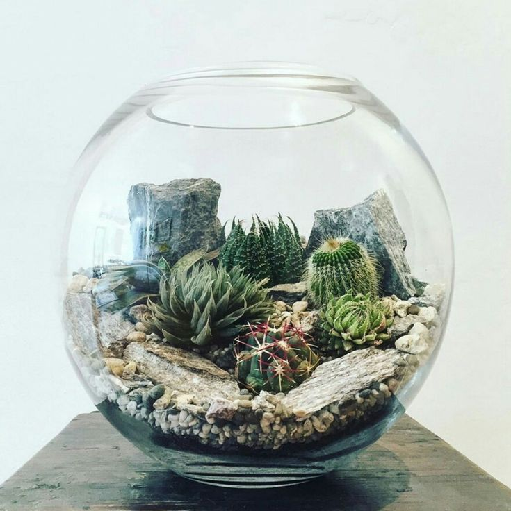 Rock and cacti fish bowl botanical terrarium