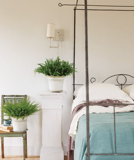 Green the Bedroom With Ferns