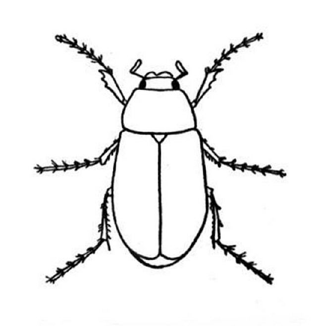 Coloring Pages Of Bugs 934