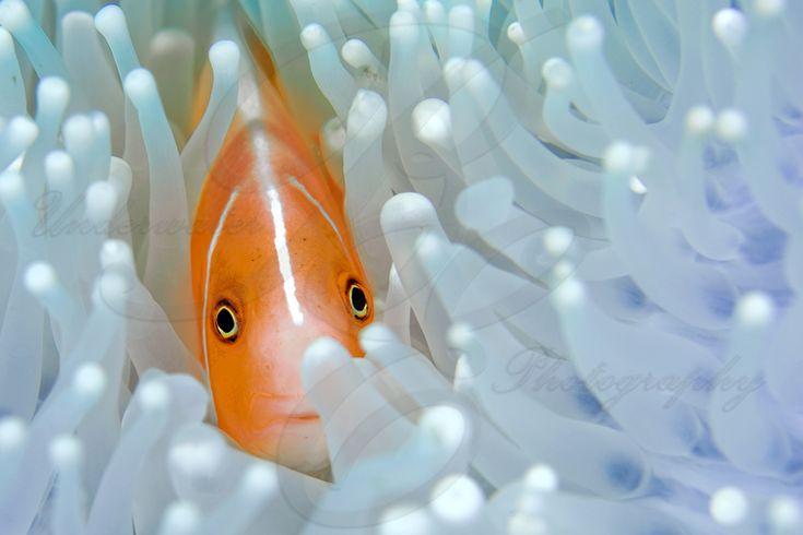 B&E Onderwaterfotografie