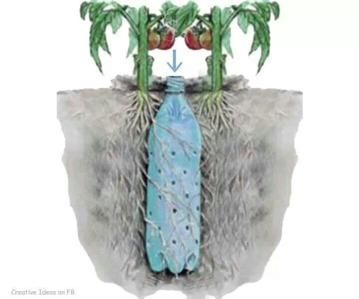 Bury hole-y water bottle to water roots of container plants
