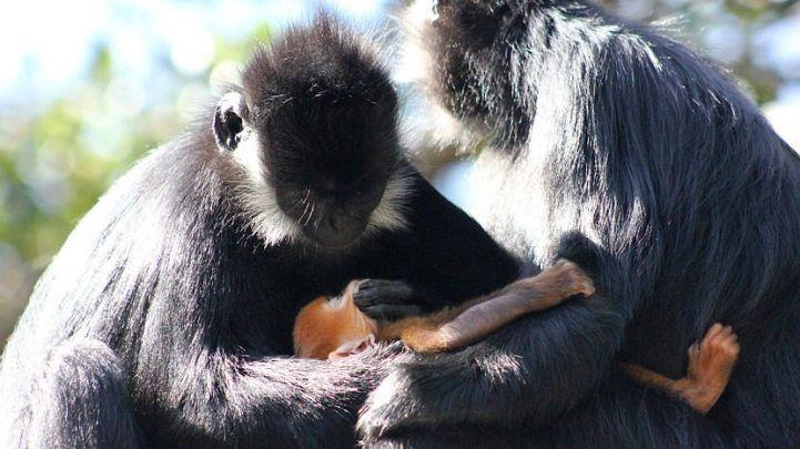 Wirklich erstaunliche Monkey Amazing Gold Leben auf der Erde – Alle …   – Adorable Animals