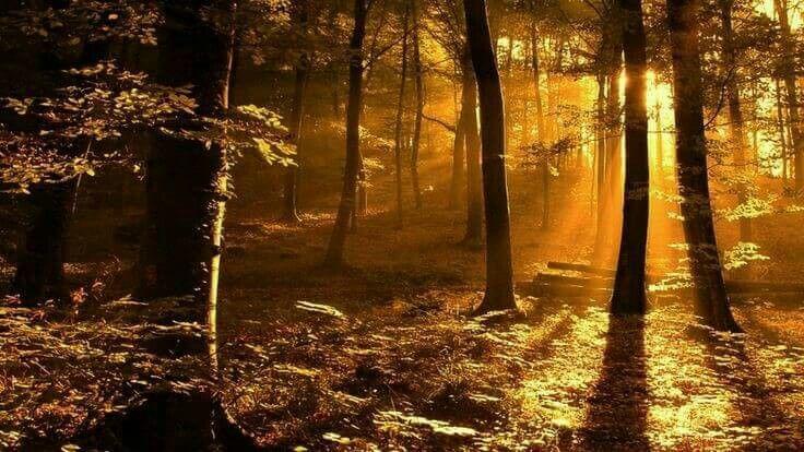 Golden shine in dark forest