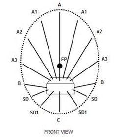 how to make a posy bowl arrangement