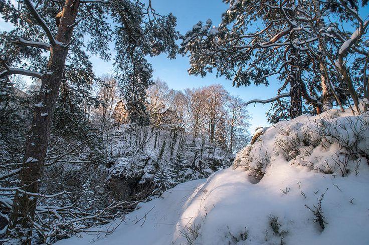 Snowy Trees. Saxon Switzerland by Jenny Rainbow
