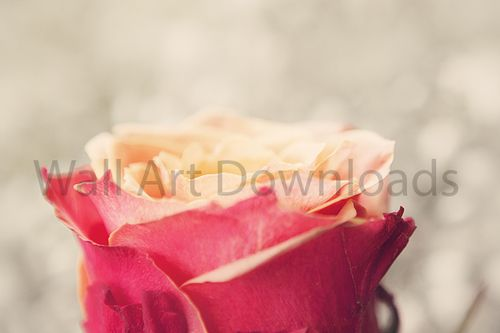 Download this red vintage flower to print and hang on your walls