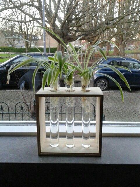 Glazen buisjes in een kubus van de Xenos.
