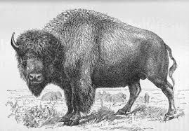 Buffalo Was Almost a Province -  The province of Buffalo proposal was spearheaded in the early 1900's by Sir Frederick Haultain, who was the first Premier of the Northwest Territories. His proposal failed to sway Prime Minister Wilfred Laurier, and in 1905 the section of N.W.T. was divided via a north-south line, creating Alberta and Saskatchewan in the process.