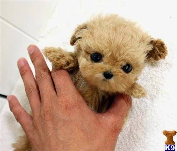 See more Top 10 Smallest Dog Breeds Cute baby animals