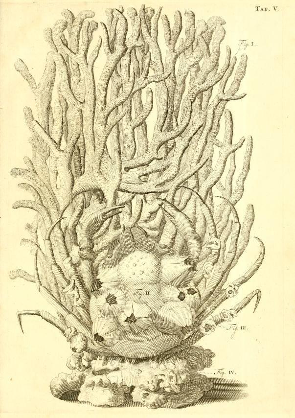 13 besten méduse Bilder auf Pinterest | Quallen, Anatomie und Fische