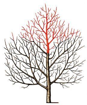 Красным цветом показаны ветки для обрезки.