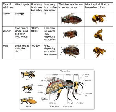 86 best Bee Unit images on Pinterest | Bees, Day care and Bugs