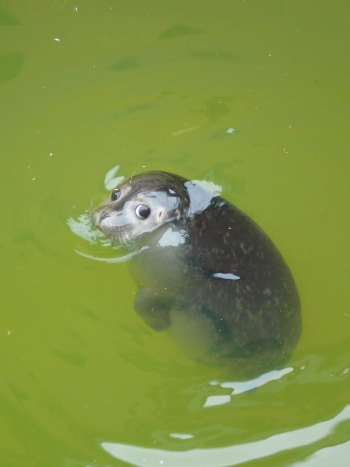 """Baby seal/""""S'cuse me, are you stalking me?"""""""