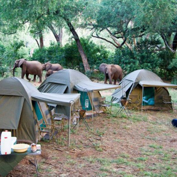 Camping in Kruger National Park - South Africa >>>OMG It's going on my bucket list. Can you imagine being this close to elephants? Amazing!! Would you do this if you could?