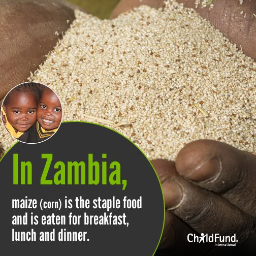#Food Fact: Zambians eat Nshima, a porridge made of ground corn/maize (called mealie meal) for breakfast, lunch and dinner. #OctoberHarvest