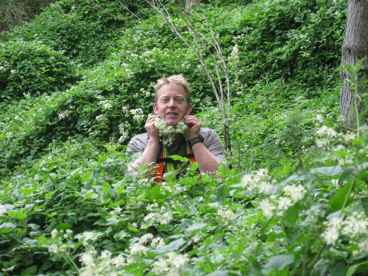 Growing a beard, you're doing it wrong - this beard's got to go!   DOC Regional Planning Manager Andrew Mercer in the Manawatu Gorge with old man's beard, one of the #WarOnWeeds dirty dozen.   Keep a look out for it in your backyard.