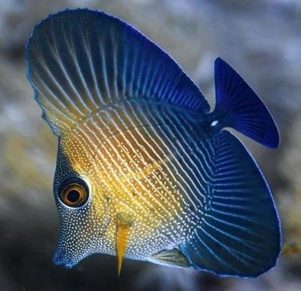 pinmarlies thoren on poissons,mamiféres,invertébrés,tortues.. | pet portraits, fish pet, pets