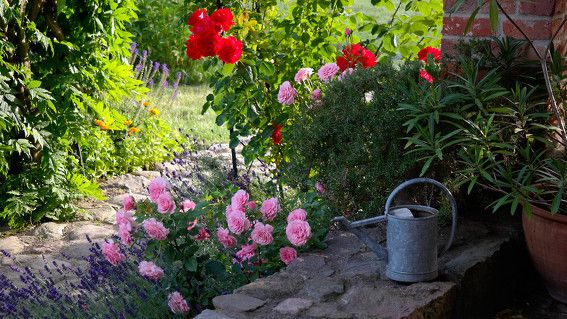 die besten 25 lavendel rosen ideen auf pinterest lila rosen lilafarbene hochzeitsblumen und. Black Bedroom Furniture Sets. Home Design Ideas
