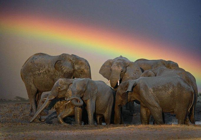 Africa | Elephants at mud hole, Hwange National Park, Zimbabwe