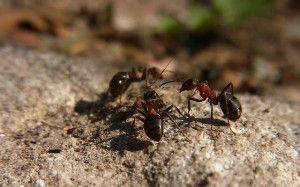 10-trucs-anti-fourmis