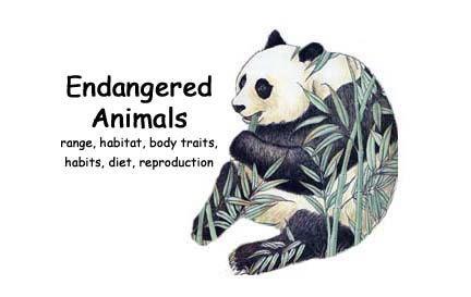Endangered Species Essay