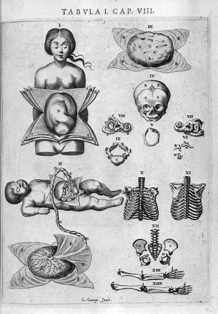 VESLING, Johann Ouvrage : Syntagma anatomicum Edition : Passau: Paulus Frambottus, 1647 Cote : 005341 Graveur : Georgi, G. Empl. de l'image : p. 97 Technique : Gravure - Burin